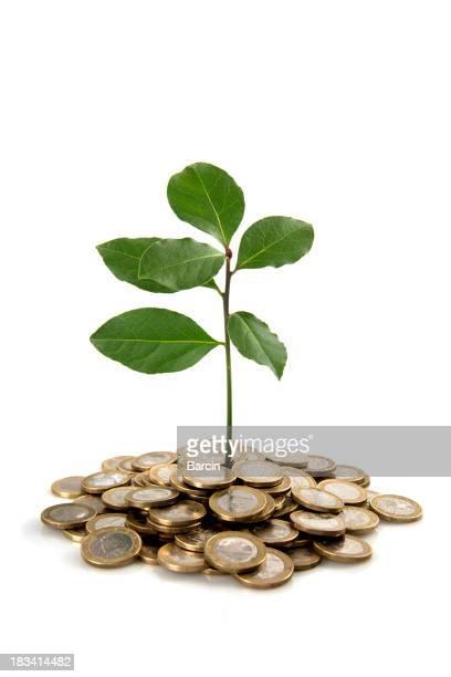 植物、硬貨