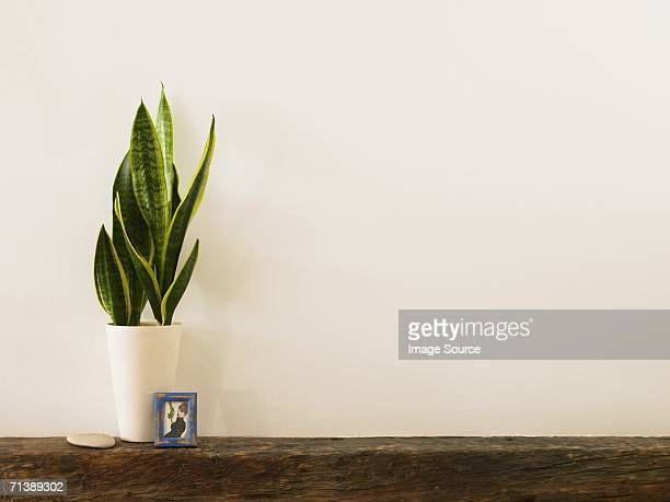 Plant and picture on a mantelpiece