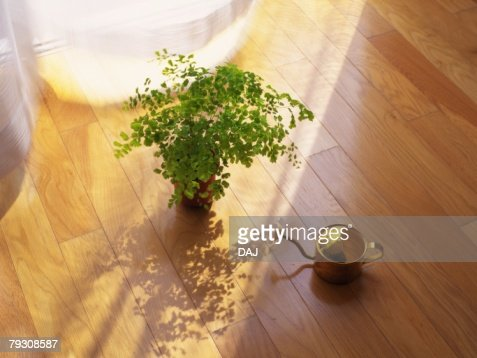 Plant And Watering Can On The Floor High Angle View Stock