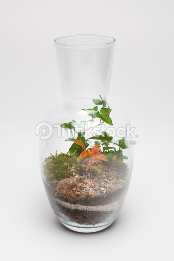 Plant Arrangement In A Glass Vase Stock Photo Thinkstock