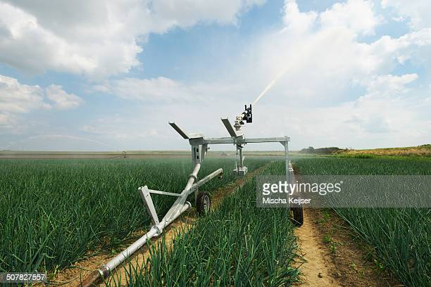 Plant crop irrigation due to prolonged drought, Rilland, Zeeland, Netherlands