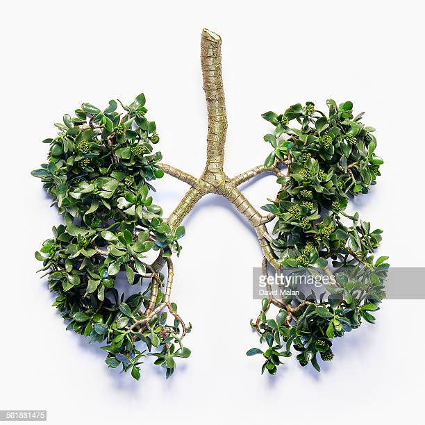 Plant cutting resembling lungs