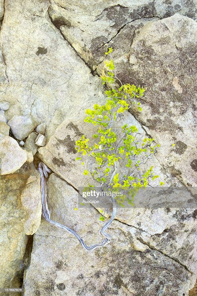 A plant finding foothold in crevice, Wongalara Station Reserve, southeast Arnhem Land, Northern Territory, Australia.