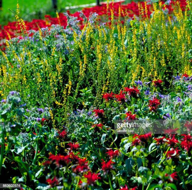 Plant Flower Garden cottage garden wild garden flowers Gartenkraeuter colorful flowers colorful garden flowers