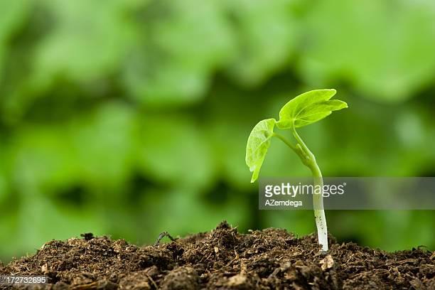 植物:緑色