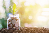 Plant growing from coins in the glass jar against blurred natural green background, sun light effect and copy space for investment, business, finance and money growth concept