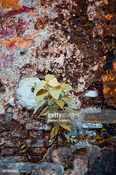 Plant growing from deprived wall