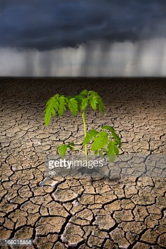 Plant Growing from Drought Plain with Rain Storm Approaching
