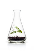 Concept photography of a small tree plant growing in an Erlenmeyer flask. A great conceptual design for science and any nature related subject area. Photo captured with a Zeiss Makro-Planar T* 2/50mm