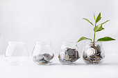 Plant growing on coins in glass jar. Increasing quantity of cash, startup, money growth concept