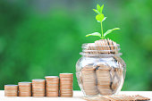 Plant growing on coins money and glass bottle on green background, investment and business concept