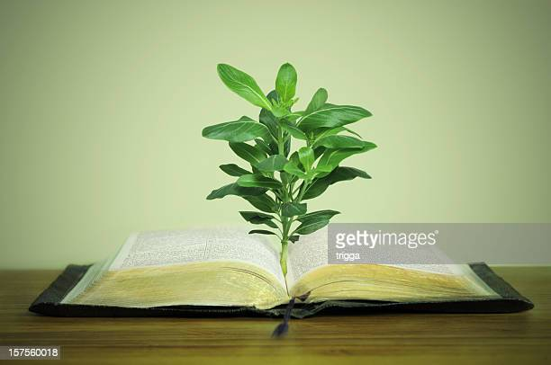 Plant growing out of old book