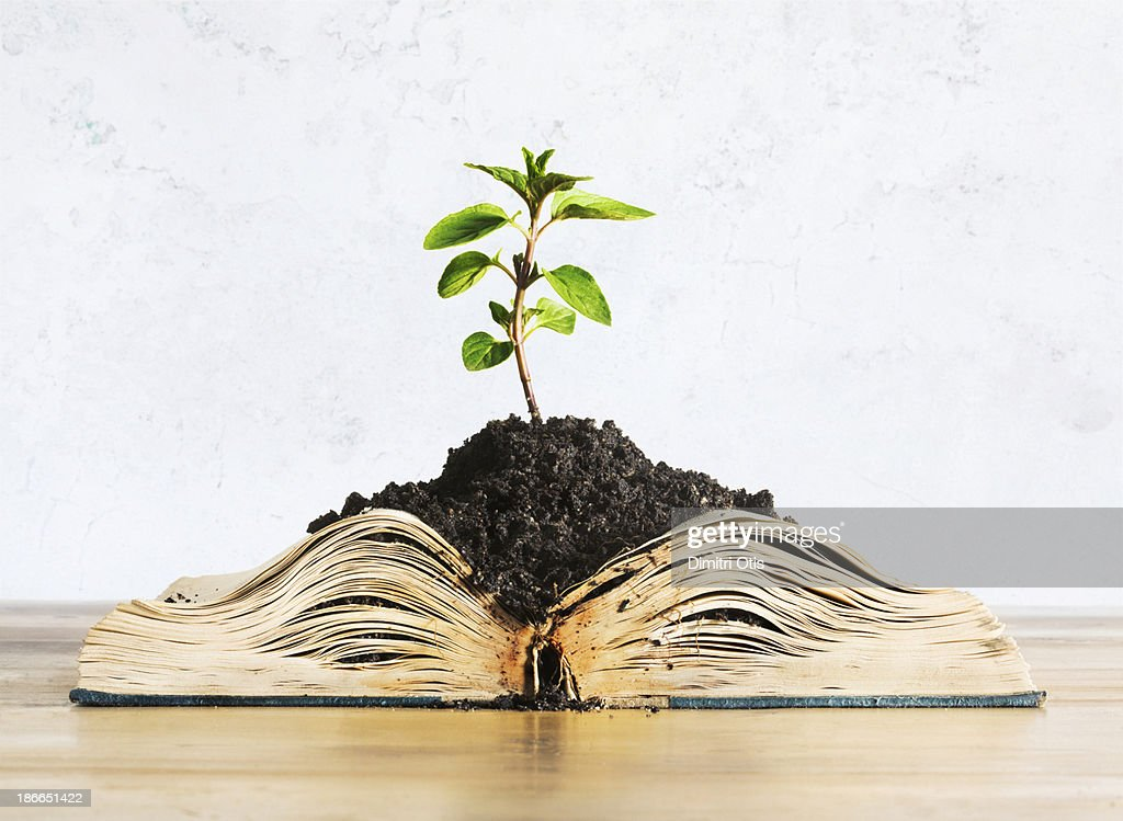 Plant growing out of open book : Stock Photo