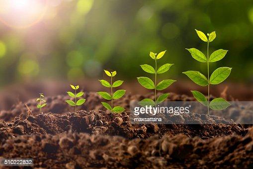 Crescimento de planta : Foto de stock