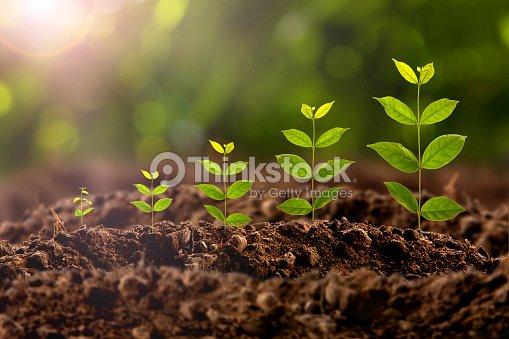 plant growing : Stock Photo