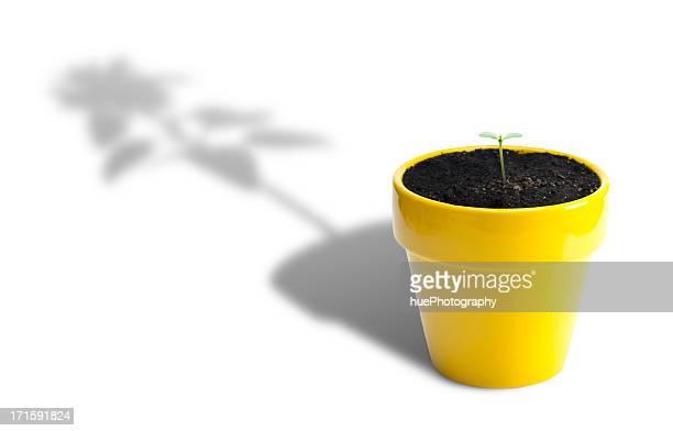 Crecimiento de la planta