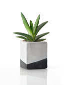 House plant in a cement square pot isolated on a white background with a shadow reflection