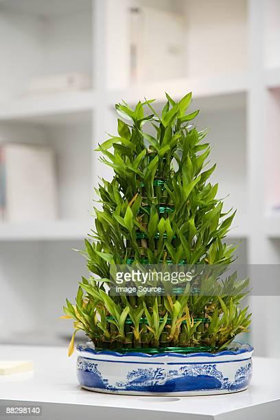 Plant dans un bureau