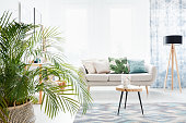 Plant in bright living room with wooden table on carpet and lamp next to sofa with floral pillow