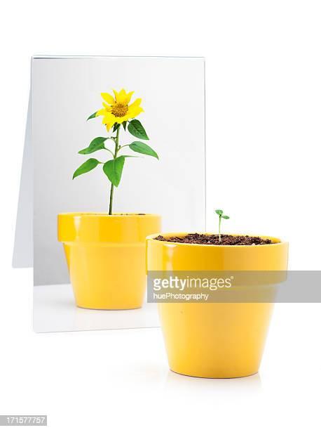 Plant dans le miroir