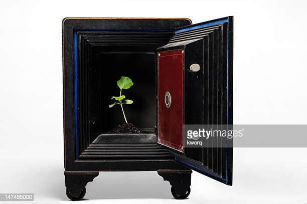 Plant in safe