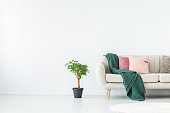 Copy space on white wall in living room with plant next to sofa with green blanket and pink pillows