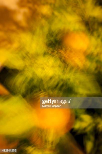 Plant leaves in motion, blurred motion