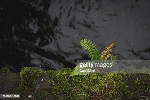 plant on an edge : Stock Photo