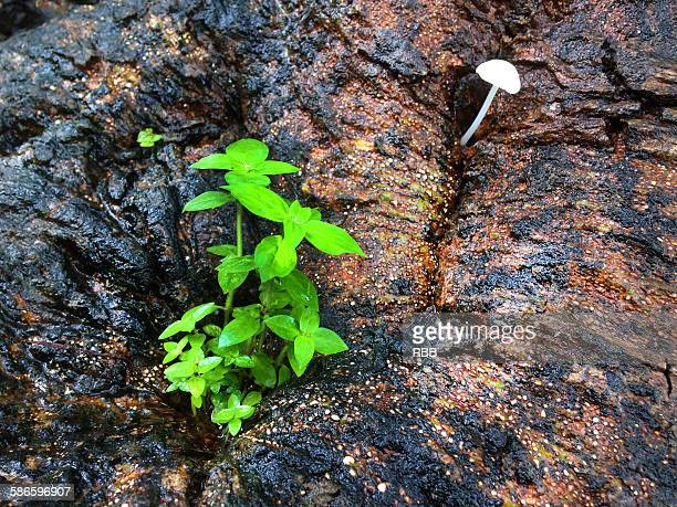 Plant on Tree Trunk