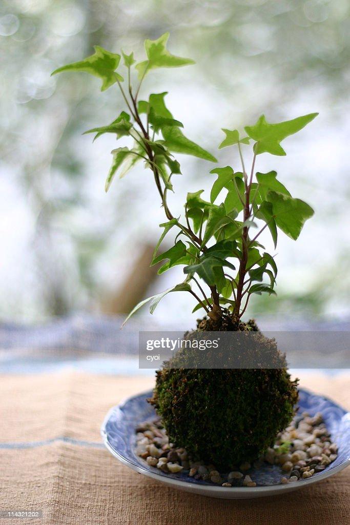 Plant : Stock Photo