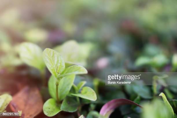 Plant Selective focus