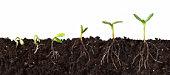 Ouvert avec des racines de plante séquence