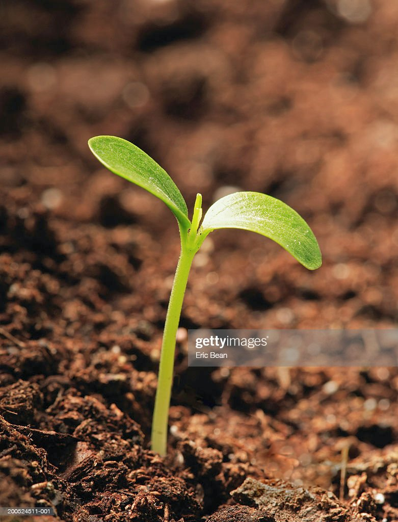 Plant sprouting from ground, close-up : Stock Photo