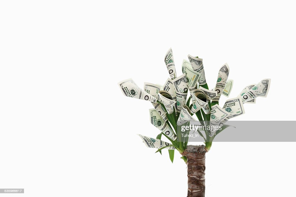Plant with flowers made from dollar notes against white background : Stock Photo