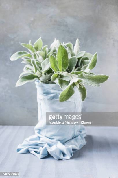 Plant wrapped in fabric