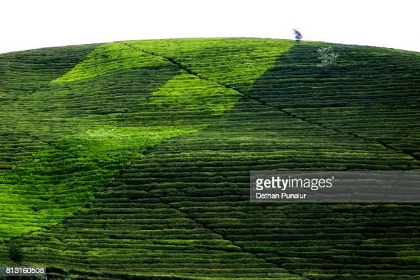 Plantation Hills