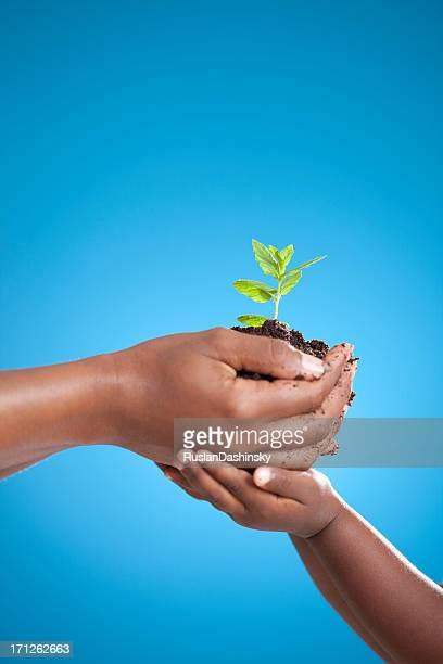 Plantées plant avec un enfant.