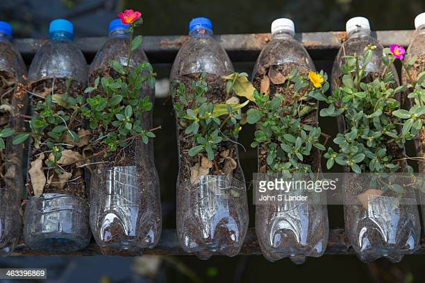 Planters creative use of used PET drink bottles using them as planters for seedlings at Bangkok Tree House