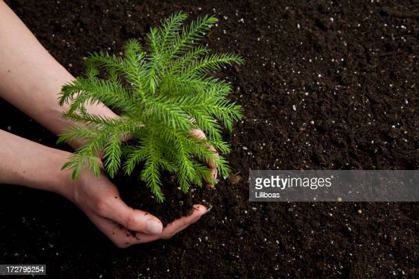 Planting a Tree (XL)