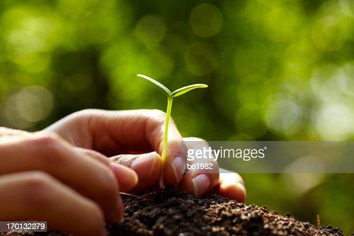 Planter Nouvelle vie