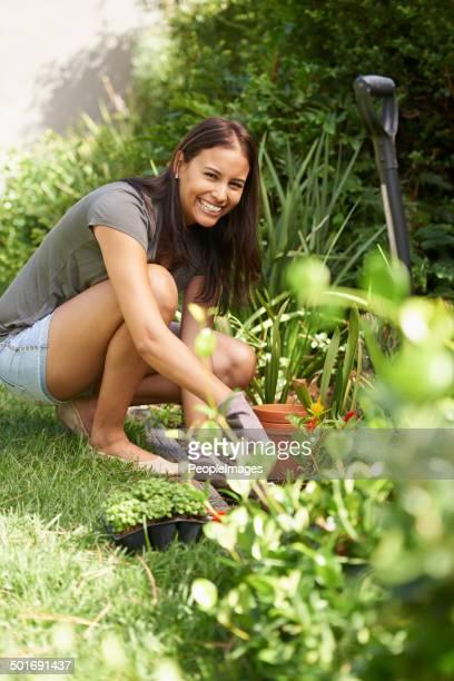 Pflanzen Sie Setzlinge mit den Frühling