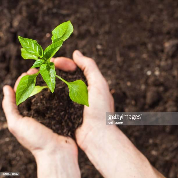 Planter des graines de légumes du jardin