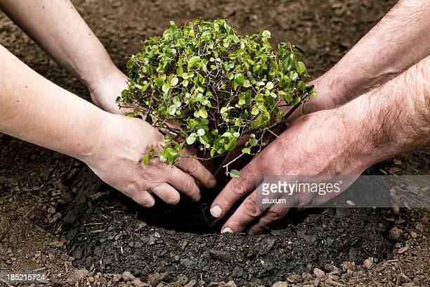 Planter petit arbre