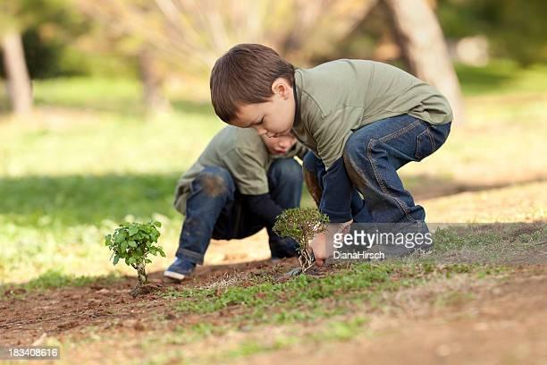 Plantando Árvore ´ s em