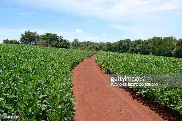 Plantio soja no Brasil