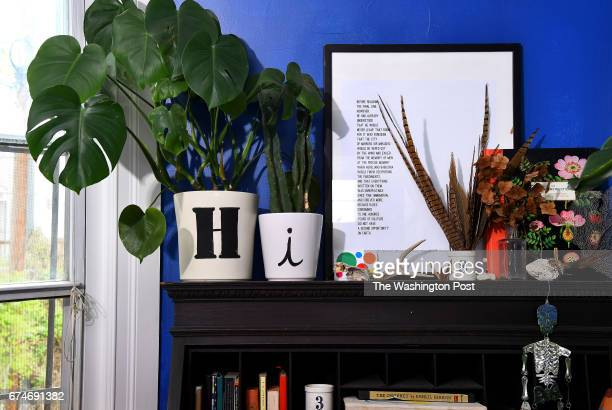 Plants and bold paint colors are inexpensive ways to dress up a room and make a statement says Holley Simmons April 17 2017 in Washington DC