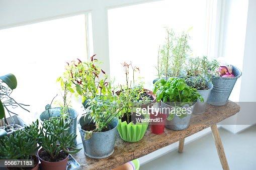 Planta de interior fotograf as e im genes de stock getty - Imagenes de plantas de interior ...