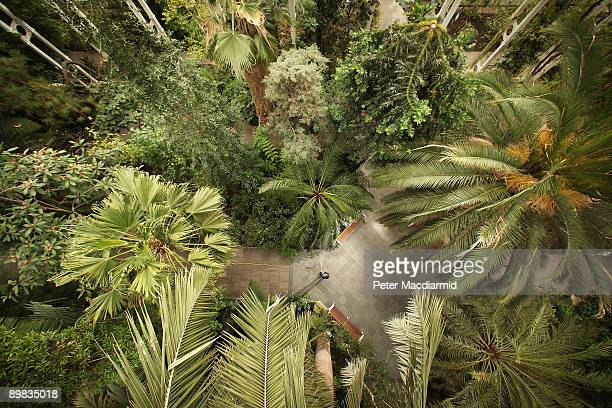 Plants and trees are watered in the Temperate House at the Royal Botanic Gardens Kew on March 25 2009 in London