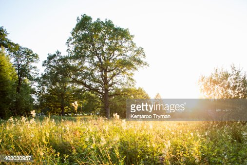 Plants and trees growing in field during summer