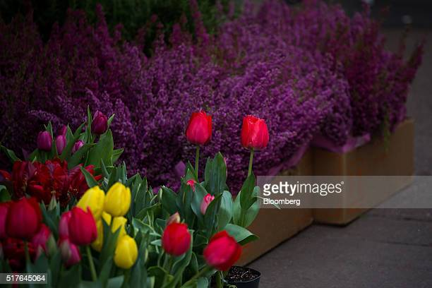 Plants are displayed for sale in Manhattan's flower district in New York US on Thursday March 24 2016 With an El Nino in the equatorial Pacific...